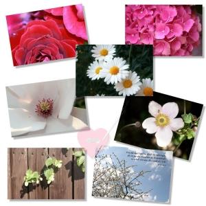 Postkarte mit wunderschönen Blumenmotiven (Motiv: Magnolienblüte)